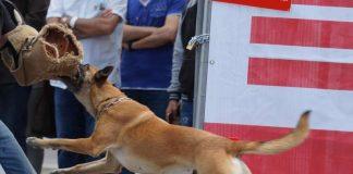 Diensthund der Polizei bei einer Präsentation.