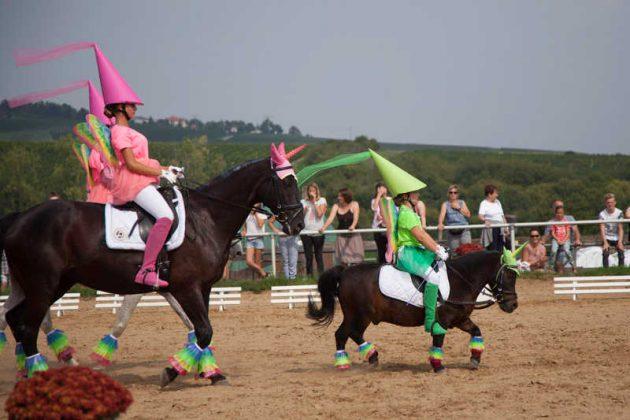 Show-Wettkampf Pony