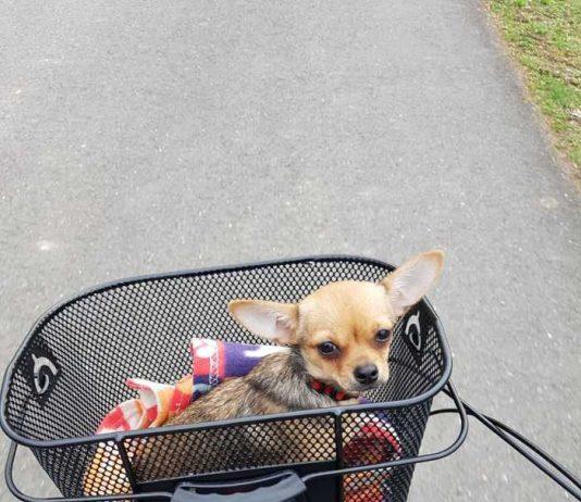 Wer hat diesen Hund gesehen? Wer weiss wo er sich aufhält? (Foto: privat)