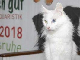 Tierischgut-Katze Credit KMK Jürgen Rösner