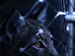 Symbolbild, Tiere, Katze, Gefangen, Tierfänger, Käfig, Lebendfalle (pxhere)