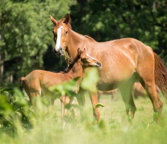 Symbolbild, Tiere, Pferde, Stute, Fohlen, Koppel © on pixabay