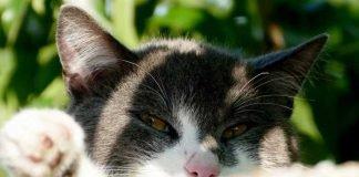 Symbolbild, Tier, Katze, Kater, Kopf, schwarz-weiss, draussen, Sonne, Relax © on Pixabay