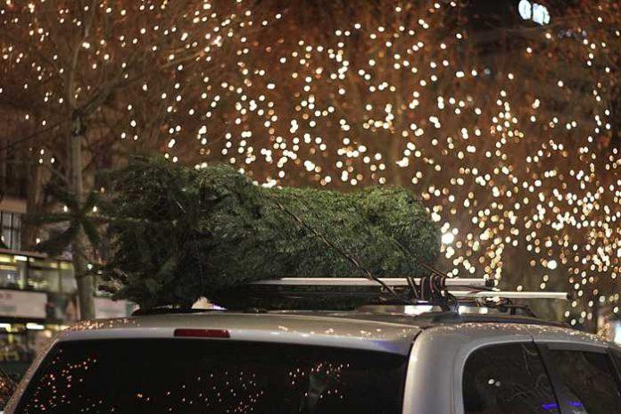 Symbolbild, Weihnachten, Weihnachtsbaum eingepackt, Transport, Autodach (pxhere)