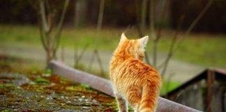 Symbolbild, Tiere, Katze, Jungtier, rot-gestreift, Rücken, draussen (pxhere)