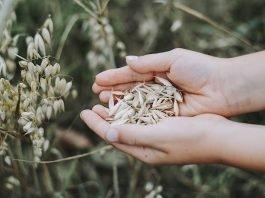 Symbolbild Landwirtschaft (Foto: Pixabay/Markus Spiske)