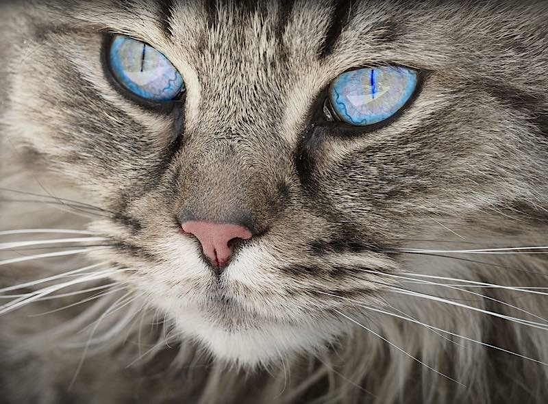 Symbolbild Katze (Foto: Pixabay)