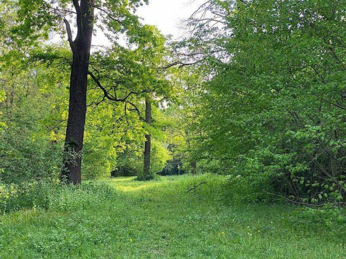 Parkinsel (Foto: Torsten Kleb)
