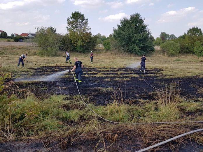 Symbolbild Flächenbrand (Foto: Feuerwehr Haßloch)