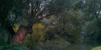 Bäume auf Rappenwört (Foto: A. Wolf)