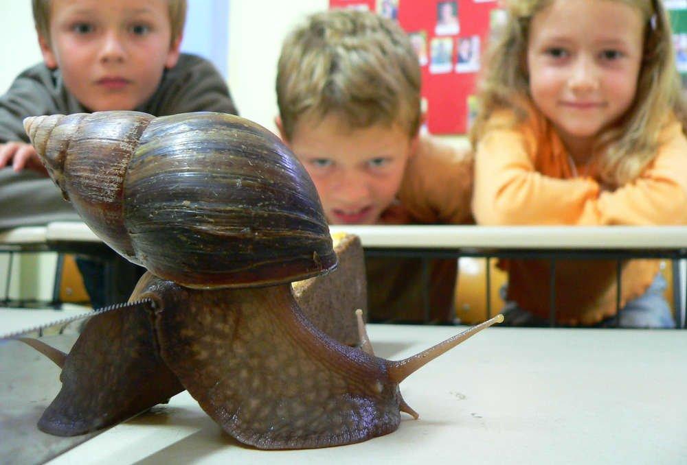 """Ab dem 10. Oktober 2020 startet das Angebot """"Zoo intensiv"""": Zehn Wochen lang kommen die Teilnehmer immer samstags in den Zoo und lernen durch die Arbeit bei und mit den Tieren Spannendes über Tiere, Natur und Artenschutz. (Foto: Zoo Heidelberg)"""