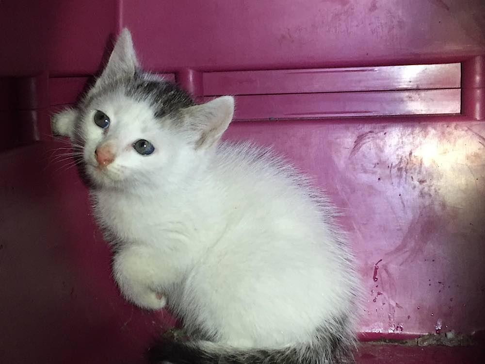 Die gerettete Katze (Foto: Feuerwehr Neustadt)