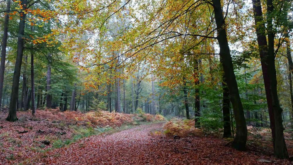 Herbstwald: Im Spätjahr ist es besonders schön im Pfälzerwald, landschaftlich und kulinarisch (Foto: Biosphärenreservat/Baumann)