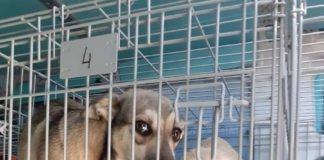 Zahlreiche Verstöße gegen Tierschutzvorschriften (Foto: Stadt Karlsruhe)