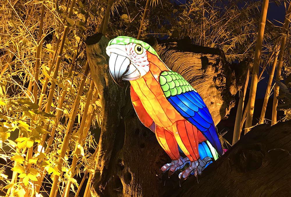 Vom 1. Oktober bis zum 29. November findet im Zoo Heidelberg das Heidelberger Zoo-Leuchten statt (Foto: Zoo Heidelberg)