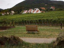 Waldsofa (Foto: Stefanie Brechtel)