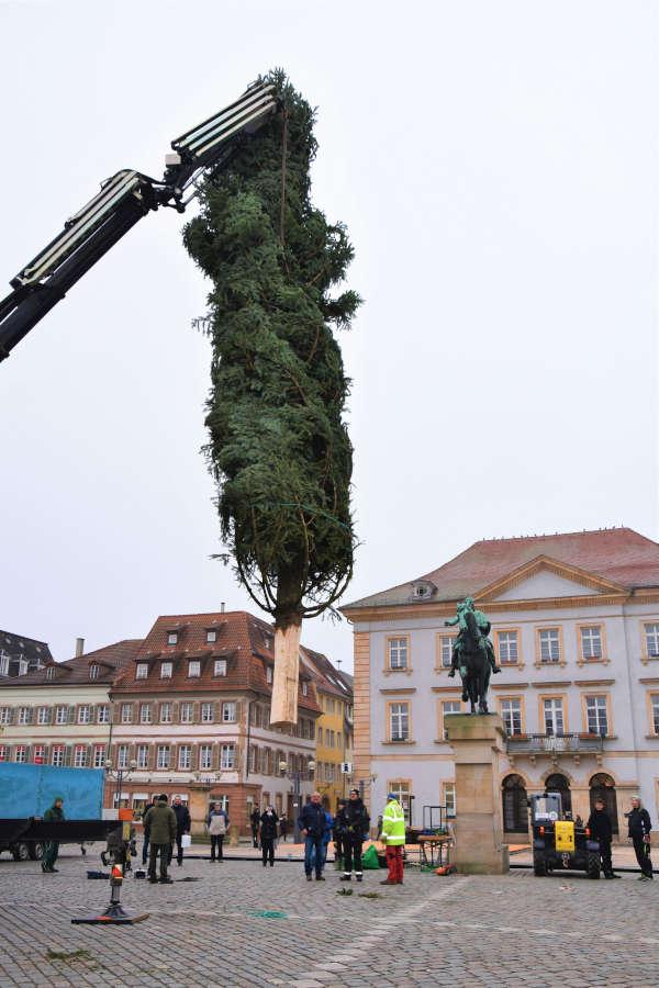 Kommt ein Tannenbaum geflogen: Auch in diesem Jahr – wie hier 2019 – soll für weihnachtliches Flair in der Landauer Innenstadt gesorgt werden. (Quelle: Stadt Landau)