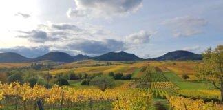 Schönste Weinsicht (Foto: Thomas Stübinger)