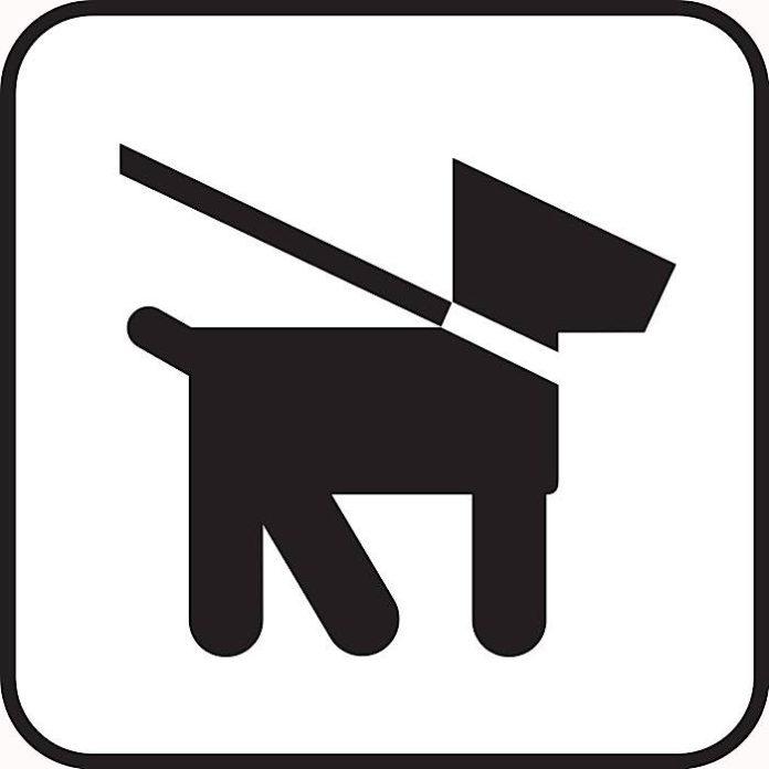 Symbolbild Hund Leine (Foto: Pixabay)