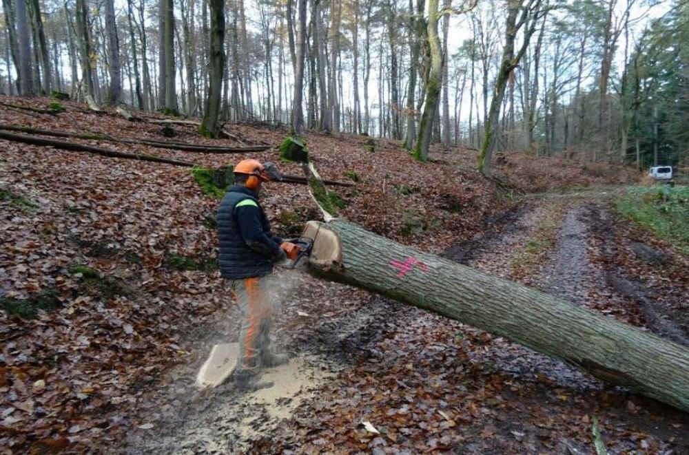 Holzerntearbeiten (Foto: Jens Bramenkamp)