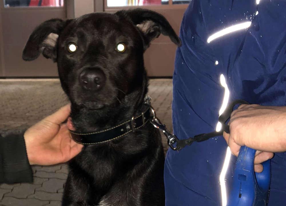 Der eingefangene Hund (Foto: Feuerwehr Neustadt)