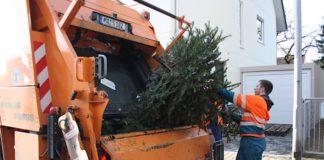 Weihnachtsbaumabholung (Foto: Stadt Mannheim)