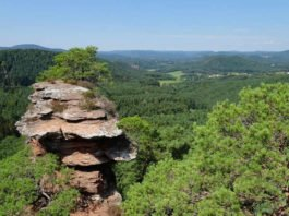 Umweltpraktikum in der Geschäftsstelle des Biosphärenreservats Pfälzerwald, das unter anderem das größte zusammenhängende Waldgebiet Deutschlands umfasst. Hier der Ausblick vom Buchkammerfels (Foto: BR/Yannick Baumann)