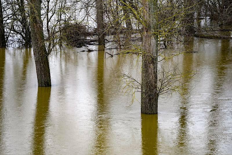Symbolbild Hochwasser Bäume Wasser (Foto: Holger Knecht)