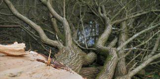 Symbolbild Baumfällung Rodung (Foto: Pixabay/Carola68)