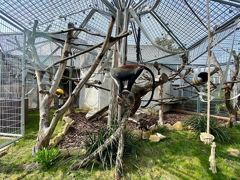 Blick ins Außengehege: Seile und Äste dienen den Affen als Klettermöglichkeiten. (Foto: Zoo Heidelberg)