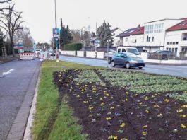 Zerstörte Blumenbeete (Foto: Stadt Speyer)