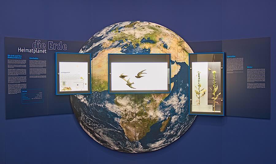 Dauerausstellung (Foto: Pfalzmuseum für Naturkunde)