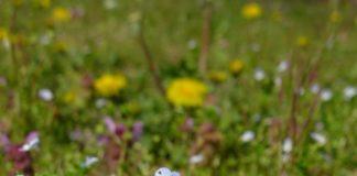 Blüten untersuchen im Outdoor-Programm des Pfalzmuseums (Foto: Pfalzmuseum für Naturkunde)