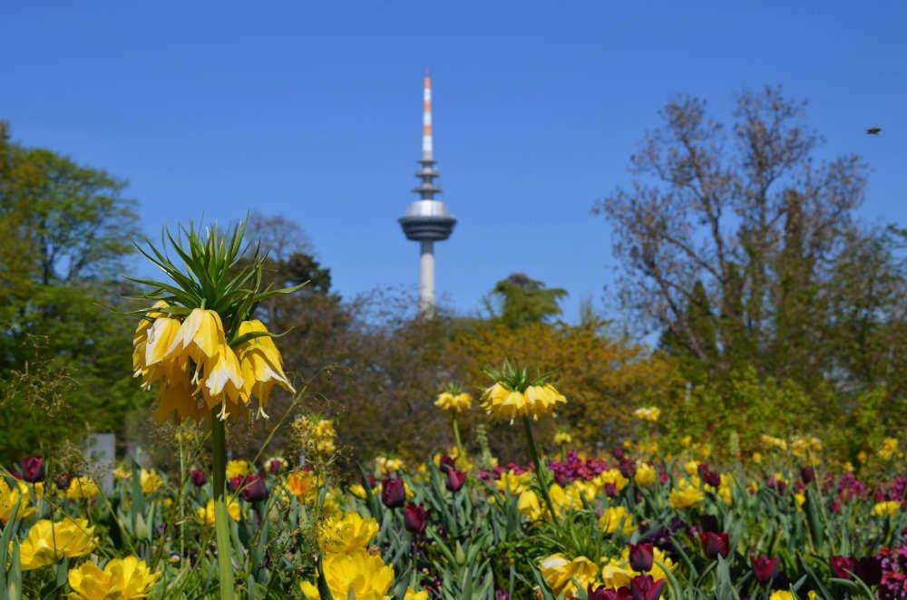 Symbolbild Luisenpark Mannheim (Foto: Stadtpark Mannheim gGmbH)