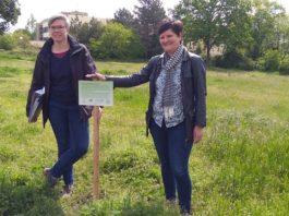 Auch auf dieser Fläche sollen demnächst viele Blumen blühen, damit die Artenvielfalt erhöht wird. Das wünschen sich Dezernentin Waltraud Blarr (re.) und Eva Lawrenz. (Foto: Stadtverwaltung Neustadt)