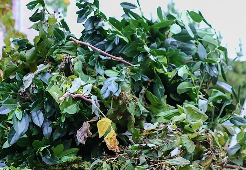 Symbolbild Grünabfälle Grünabfall Grünschnitt (Foto: Pixabay)