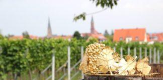 Krone der Edenkobener Weinprinzessin (Foto: Rathaus Edenkoben)
