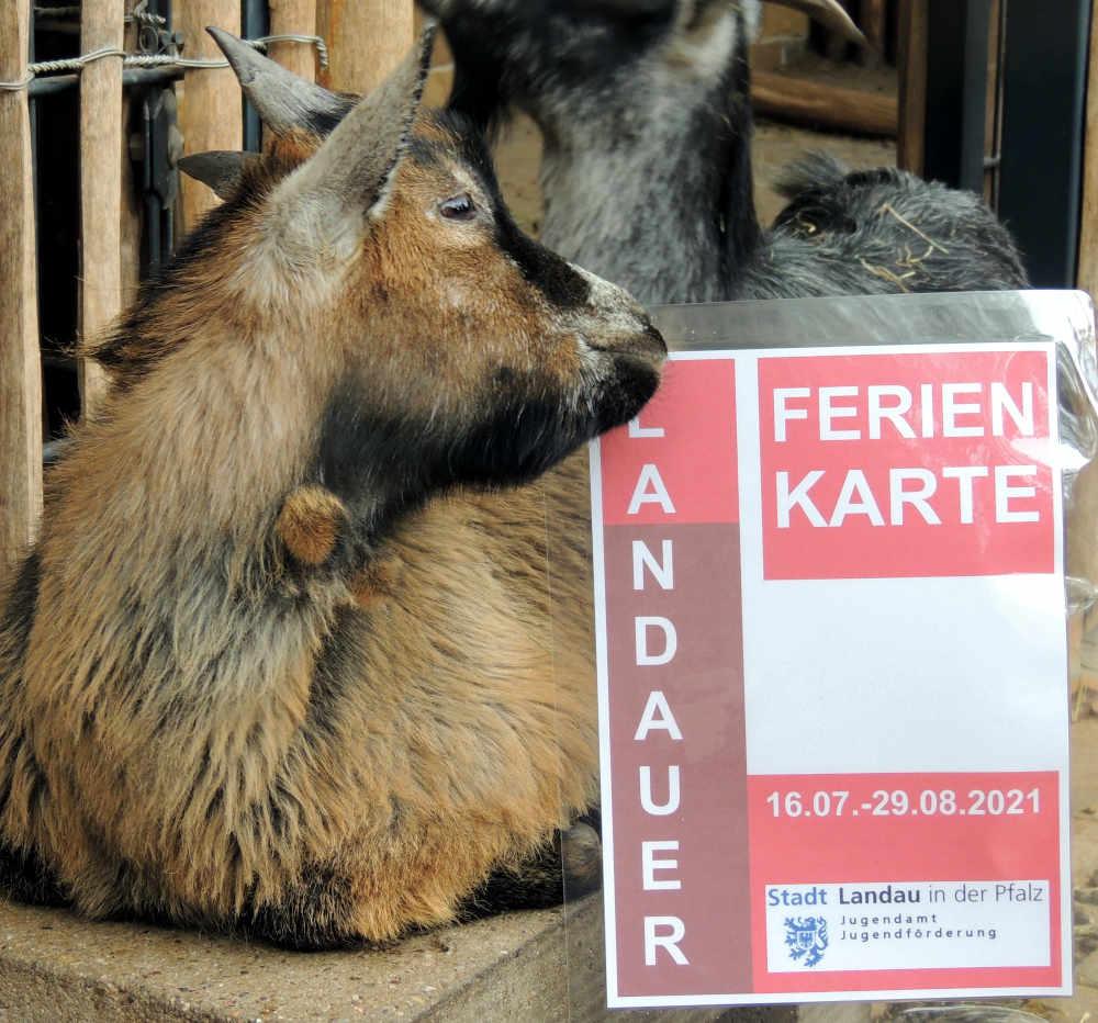 Mit dem Landauer Ferienpass kann auch der Zoo Landau besucht werden. (Quelle: Stadt Landau)