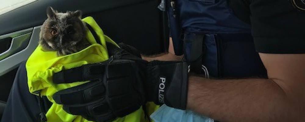 Die Eule wurde direkt an der Fahrbahn aufgefunden (Foto: Polizei RLP)