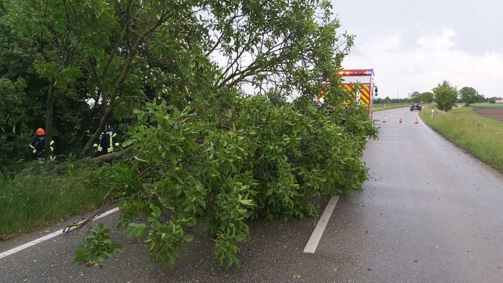 Der umgestürzte Baum wurde beseitigt (Foto: Feuerwehr Haßloch)