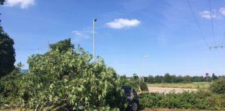 """Der """"geköpfte"""" Baum (Foto: Polizei RLP)"""