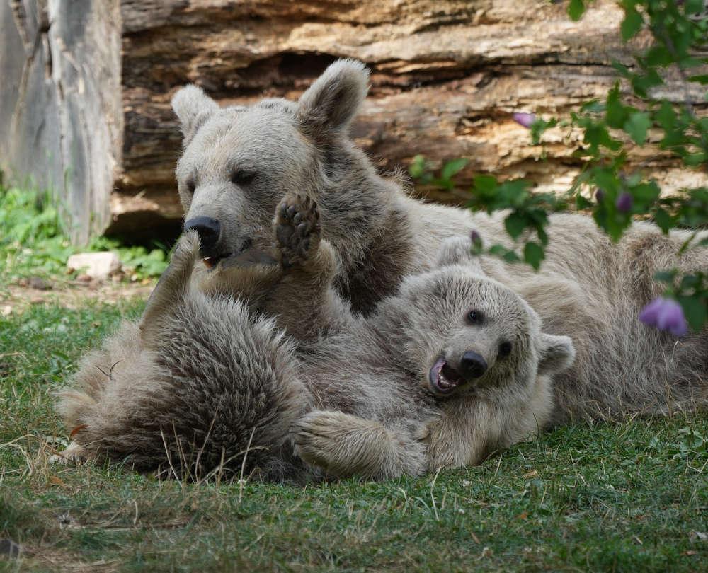 Zoo Heidelberg August 2021 (Foto: Holger Knecht)