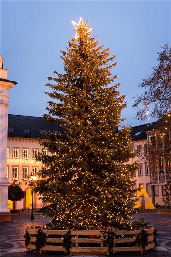 Der Baum aus dem vergangenen Jahr (Foto: Stadtverwaltung Frankenthal)