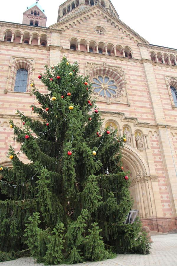 Weihnachtsbaum Domvorplatz (Foto: Stadt Speyer)