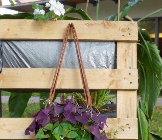 Auch eine alte Handtasche bietet eine tolle Pflanzmöglichkeit. (Foto: Pfalzmuseum für Naturkunde)