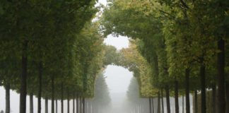 Herbst im Schlossgarten Schwetzingen (SSG Pressebild/Uschi Wetzel)